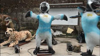 Ocean park life size animated penguin statues
