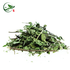 Chinese Fresh Dried Marigold Mint Leaf Mulberry Leaves Peppermint Spearmint Jiaogulan Leaf Kuding Extract Herbal Slimming Tea