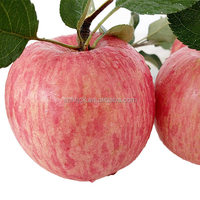 China Exporter Best Price Fresh Fruit Red Fuji Apple