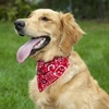 Wholesale Pet Dog Scarf Collar Adjustable Puppy Bandana Quality Dog Cat Tie Collar