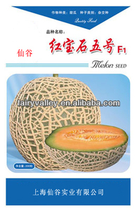 High Yield Japanese Musk Hami Sweet Melon Seeds For Cultivation-Ruby No.5 F1