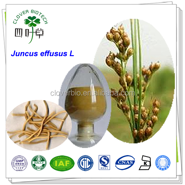 ISO Certificated pure natural Juncus effusus L