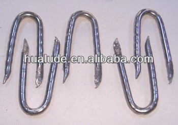 Galvanized U Shape Nails Stainless Steel From China