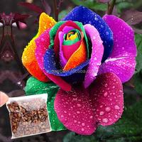 500Pcs Rose Seeds,Rainbow Petal Plants,Home Garden Flowers