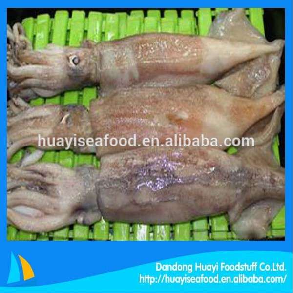 price of fresh frozen baby squid for wholesale