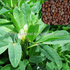 Common Fenugreek Seed Extract Powder Semen Trigonellae extract 4-hydroxyisoleucine 20%