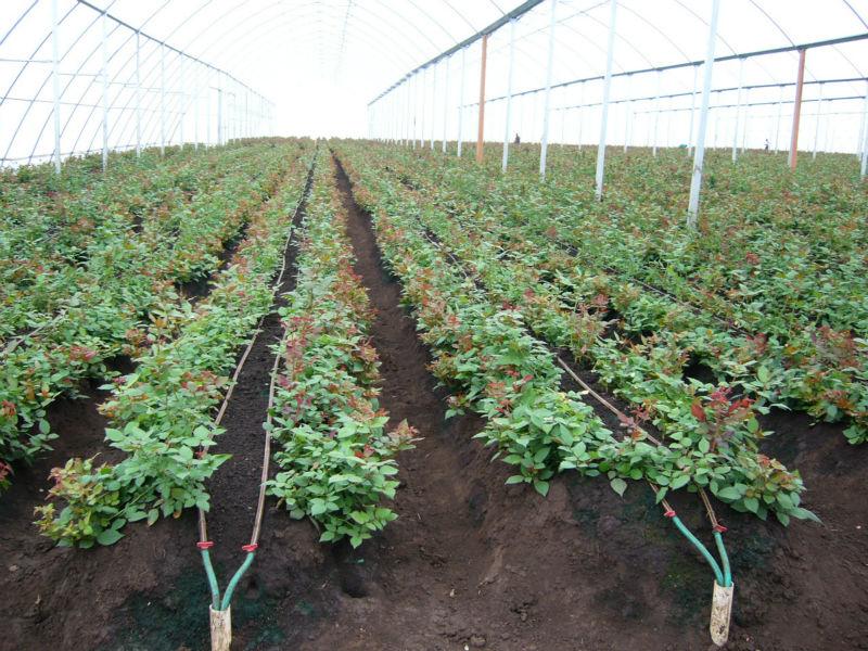 Drip Irrigation System For Watermelon Buy Farm