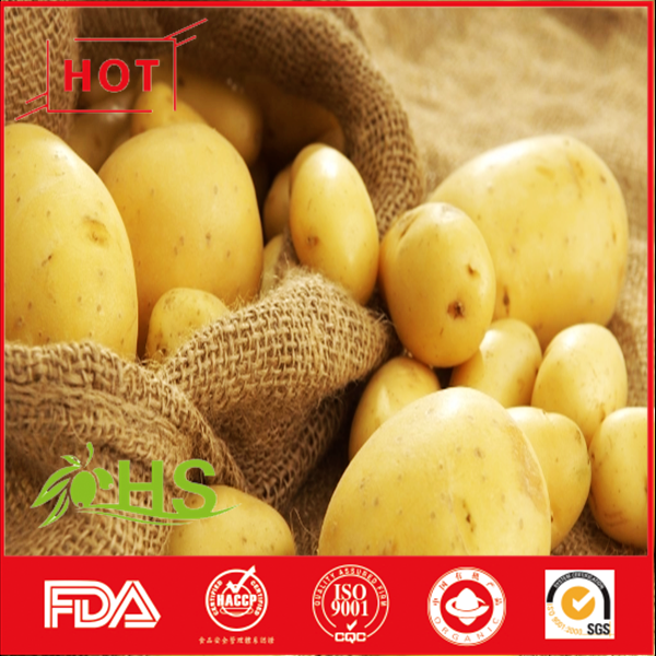 Wholesale Fresh Holland Potato Price