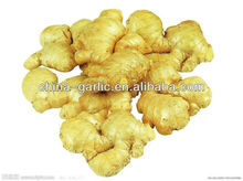 2016 new Corp fresh ginger for sale of high quality