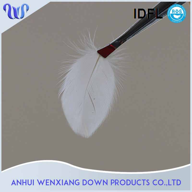 Wholesales Fashionable Buy White Duck Feather Fill