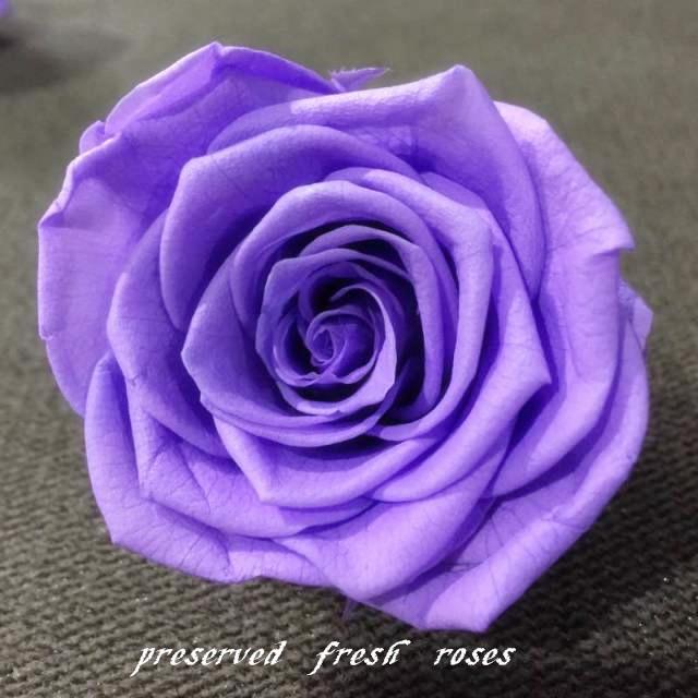 grossiste purple rose vetement acheter les meilleurs. Black Bedroom Furniture Sets. Home Design Ideas