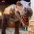 KANO-001 Outdoor Decoration animatronic t rex