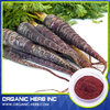 Black Radish Extract Powder 4 1 10 1