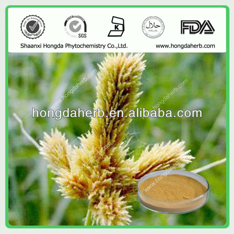 (KOSHER Certificated)Rhizoma Cyperi / Nutgrass Galingale Rhizome extract