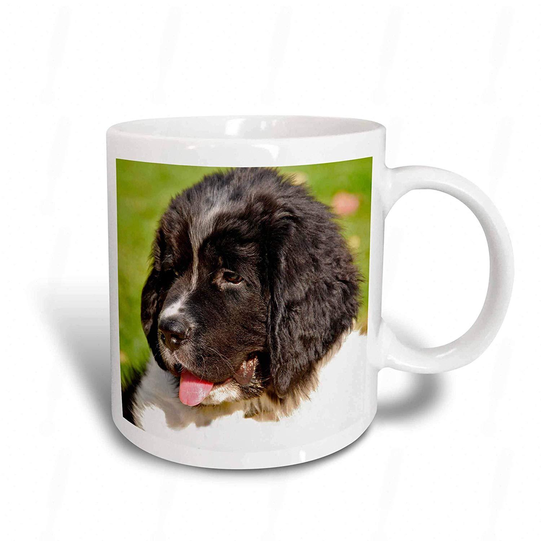 Set of 4 3dRose cst/_93608/_1 Oregon Portland Landseer Newfoundland Dog Puppy-US38 BJA0526-Jaynes Gallery-Soft Coasters