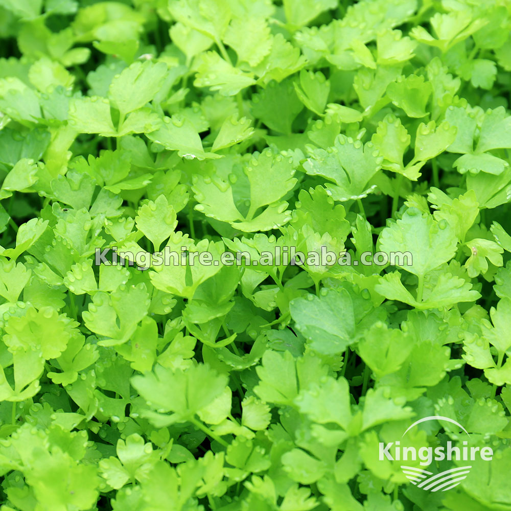 Asian Vegetable Seed 86