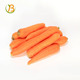 2016 crop hot sale fresh carrot with low price