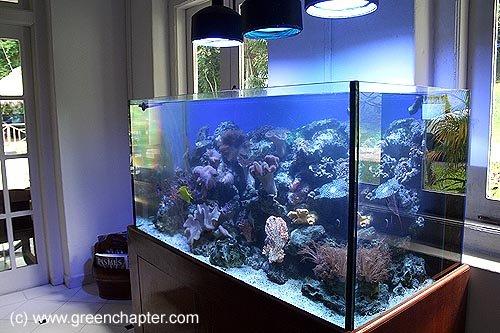 Marine Aquarium #1
