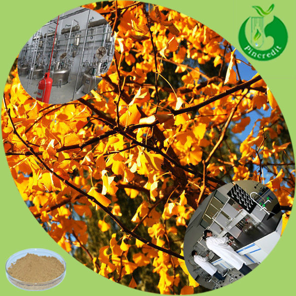 Ginkgo leaf extract 24/6 ginkgo extract ginkgo biloba extract