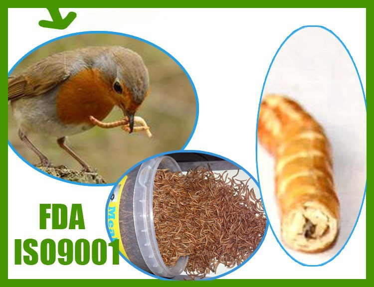 High protein reptiles food ,Dried Mealworms