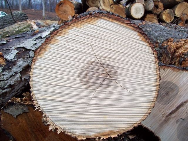 List manufacturers of hickory logs buy get
