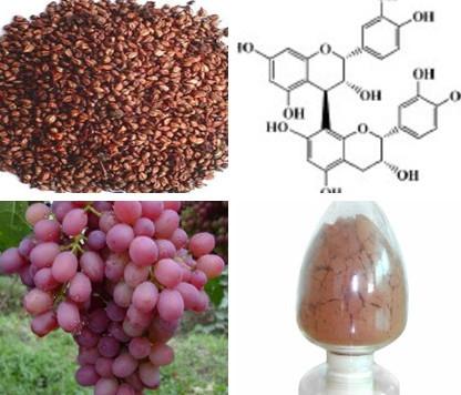 Organic Grape Seed Extract Grapefruit Seed Extract Powder Grape ...