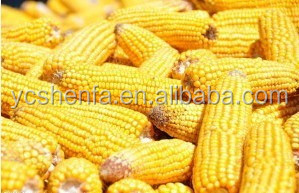 Corn gluten meal 60% (feed grade) for animal feed additives in china