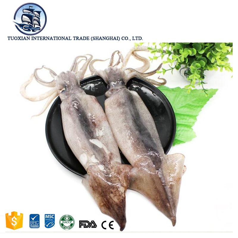 Best selling seafood products peru frozen illex squid price