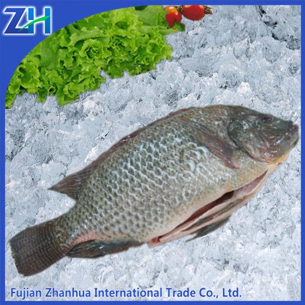 fresco congelado de pescado tilapia precio al por mayor