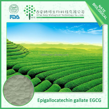 New batch 100% pure Epigallocatechin gallate EGCG 95% Green Tea Extract