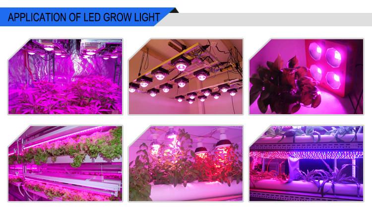 Original Cree Cob Cxb3590 Cxb 3590 Led Grow Light 3500k Cd