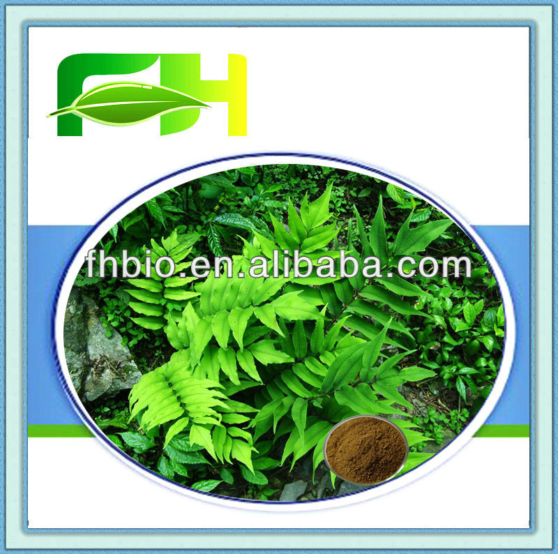 Best Quality Natural Rhizoma Dryopteris P.E.