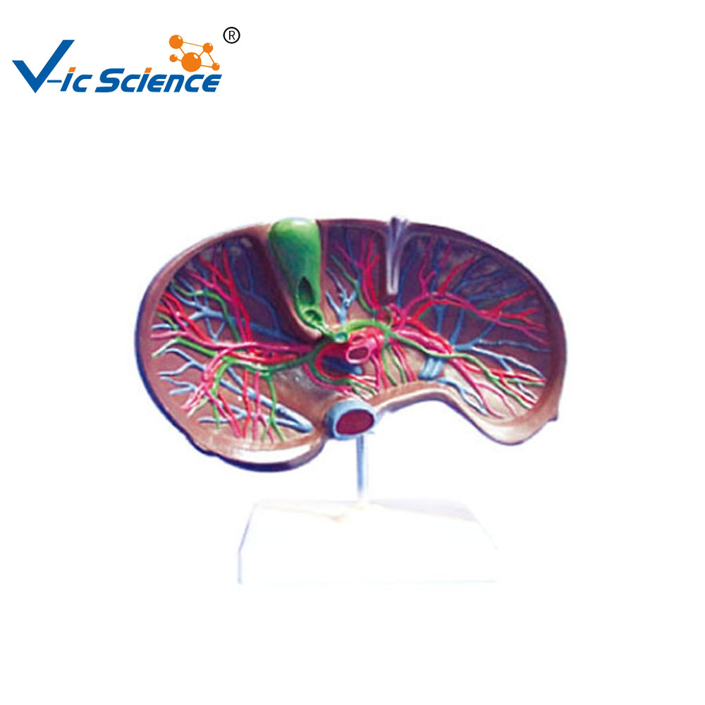 You Liver You Liver Suppliers And Manufacturers At Alibaba