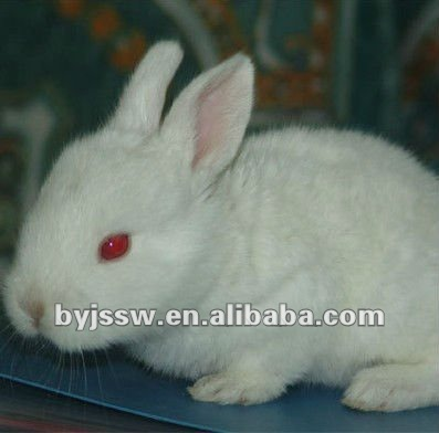 Folding Metal Wire PVC Coated Rabbit Cage