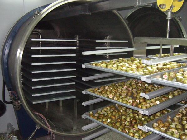 Industrial Vacuum Freeze Dryer Dry Machine Freeze Drying