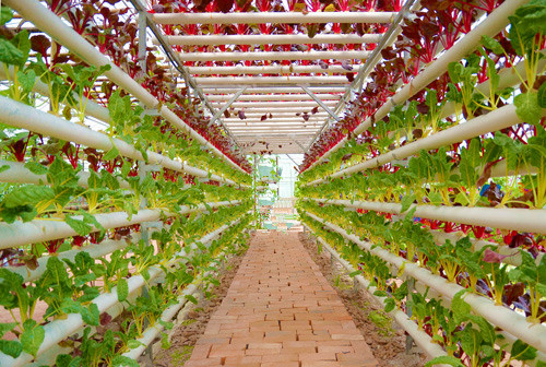 Indoor Plant Factory Hydroponics System Vertical Farming