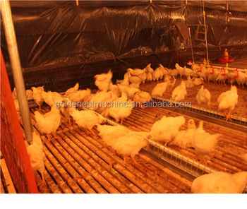 Goldenest poultry chain feeding system plastic scraper open feed trough for breeder layer equipment supplies