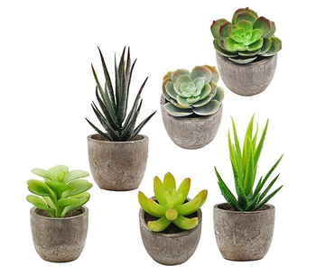 Amazon Best seller 6 Pcs Assorted Potted Succulents Plants with Gray Pots