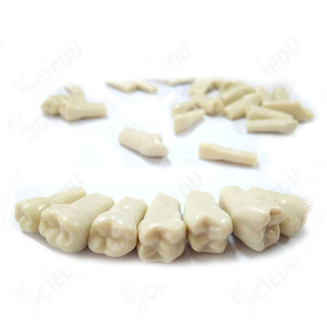 Frasaco AG-3 Replacement Teeth Practical False Dental Teeth Model Frasaco Typodont Teeth Model