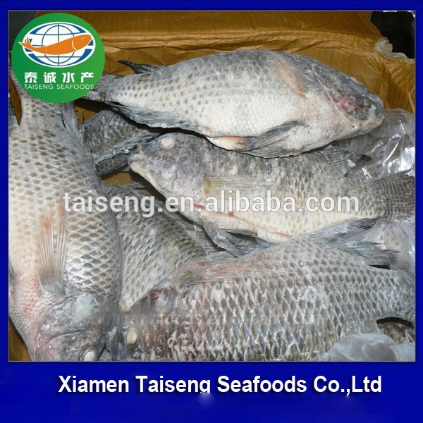 Frozen Tilapia Fish Gutted & Scaled For Us Market