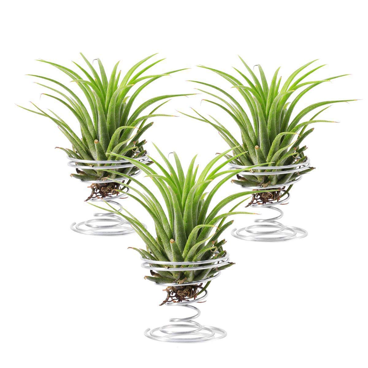Air Plant Holder,3 Pack Stainless Steel Air Plant Holder Container Tabletop Stand Vase Pot for Hanging Air Plant Small Tillandsia Mini Cactus Faux Plants Indoor Wall Home Decor