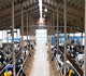 Professional automatic poultry farm house/cow house