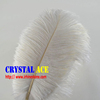 White Colour Party Ostrich Feathers, Ostrich Plumes Feathers, Dyed Ostrich Plumes for Wholesale