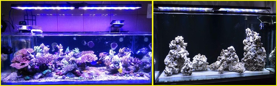 Wholesale 3pcs chinese aquariums arowana fish led lights planted ...