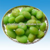Chinese green preserved plum