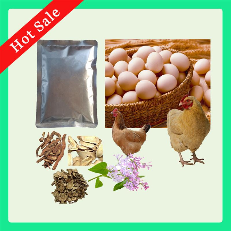 Animal Chicken Drugs Eggs Drugs to Increase Production Herb Extracts