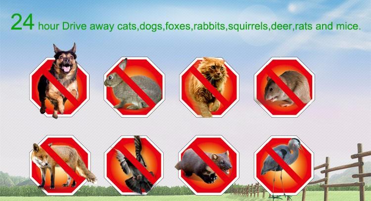 Ultraschall-Hundeabwehrmittel / Eidechsenabwehrmittel / tötendes Insekt