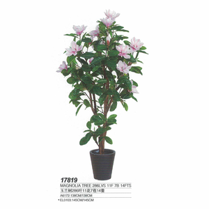 Magnolia Bonsai Tree Magnolia Bonsai Tree Suppliers And
