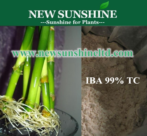 Hormodin IBA fertilizer increased root