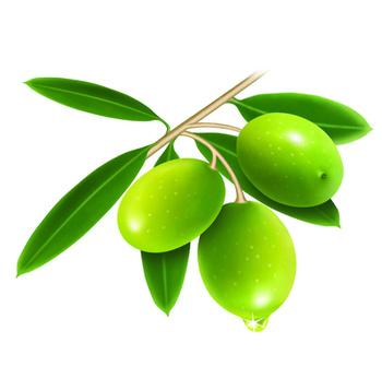 olive leaf diabetes